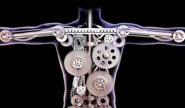 O que é metabolismo - anabolismo, catabolismo e energia