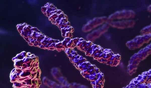 Genoma e DNA genômico