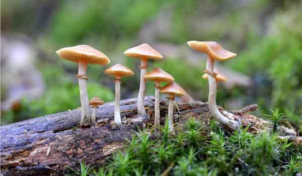 Reino Fungi: características, classificação, reprodução, exemplos - resumo