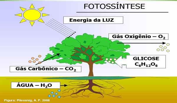 Fotossíntese: o que é, como ocorre, processo, equação - Resumo