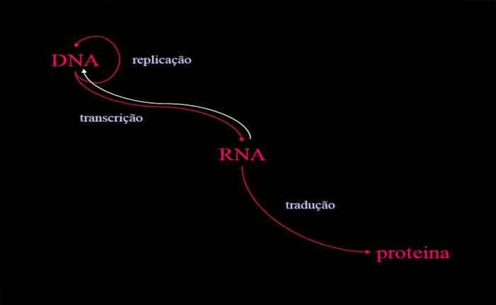 Regulação da expressão gênica: como o genes são regulados